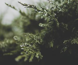 alternative, beautiful, and green image