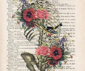 anatomy, skeleton, and illustration image