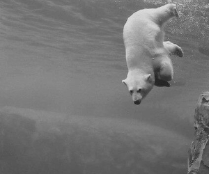 animal, black and white, and bear image