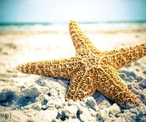 beach, sand, and ocean image