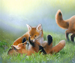 cubs, drawing, and foxes image