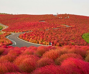 amazing, land, and red image