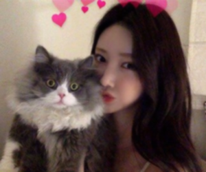 cat, pale, and ulzzang image