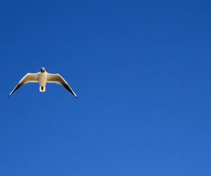 bird, seagull, and fly image