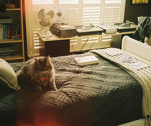 cat, bed, and room image