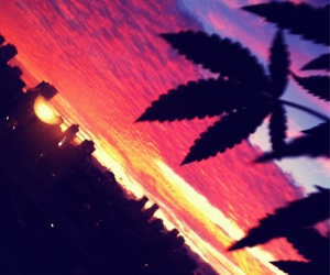 weed, sunset, and city image
