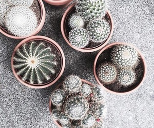 cactus, plants, and beautiful image