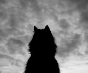cat, wolf, and animal image