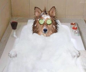 dog, funny, and bath image
