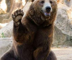 animal, bear, and cool image