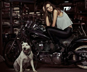 dog, motorcycle, and motos image