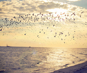 birds and ocean image