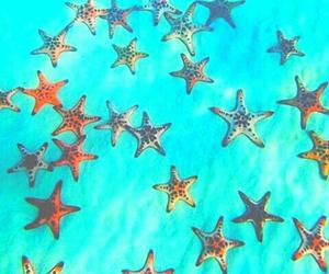 starfish and tumblr image