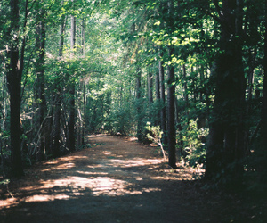 nature, forest, and vintage image