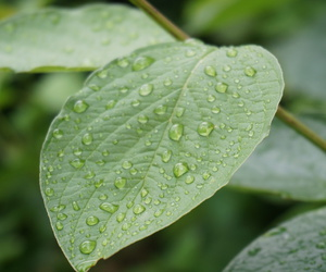 green, raindrops, and leaves image