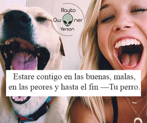amor, animals, and frases image