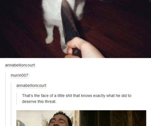 funny, loki, and cat image