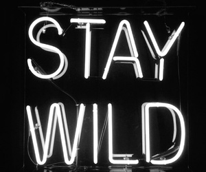 wild, light, and stay wild image