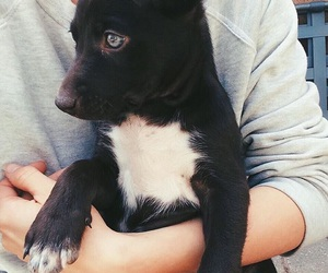 dog, black, and cute image