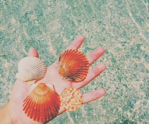 photography, tumblr, and seashells image