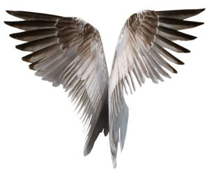 angel, background, and clipart image