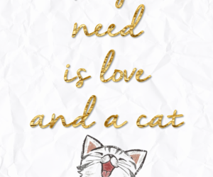 amor, cats, and Gatos image