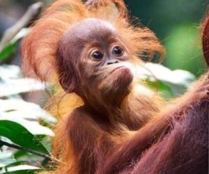 amazing, monkey, and natural image