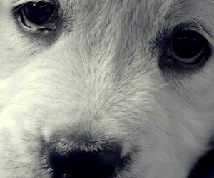 puppy and white image