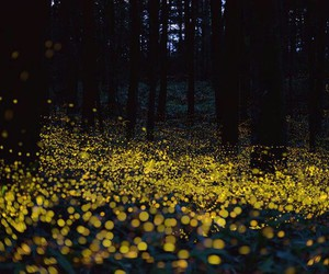 fireflies, forest, and lights image