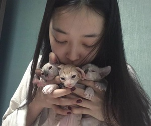 sulli, f(x), and cats image