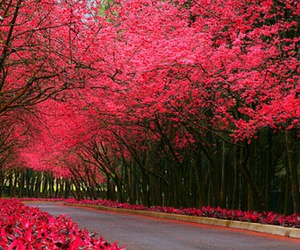 nature, weheartit, and pink image
