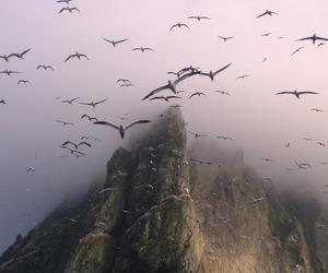 bird, mountains, and nature image
