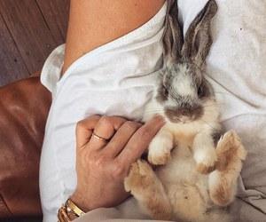 bunny, jewels, and fashion image