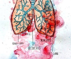anatomy, art, and watercolor image
