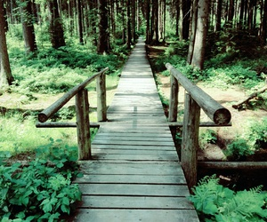 trip, walk, and woods image
