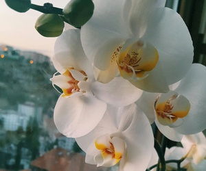 flowers, natural, and white image