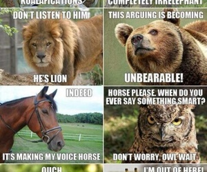 funny, animal, and lol image