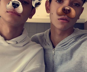 dogs, lucas, and marcus image