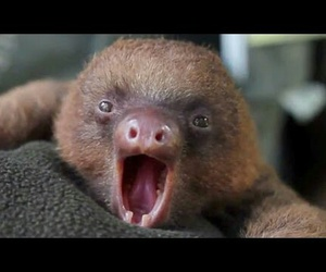 sloth, animal, and gif image