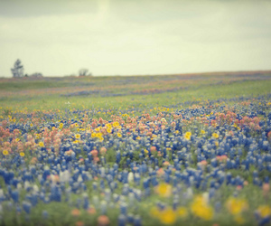 colorful, sky, and flowers image