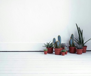 cactus, plants, and minimalist image
