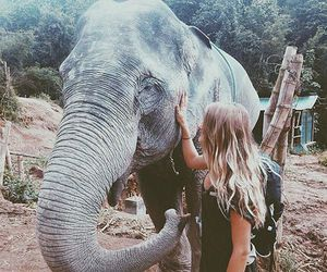 elephant, animal, and girl image