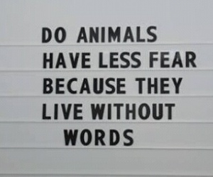 animals, fear, and words image
