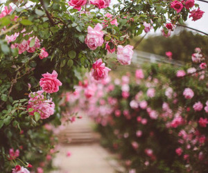 floral, flowers, and romantic image