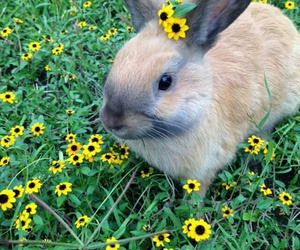 bunny, animals, and flowers image