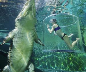 crocodile, animal, and nature image