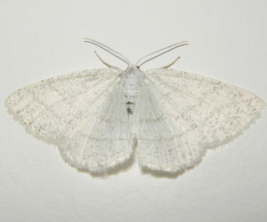 white, moth, and butterfly image
