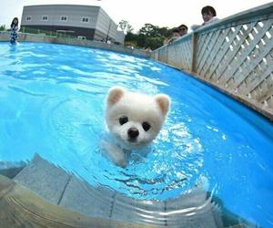 dog, pomeranian, and puppy image