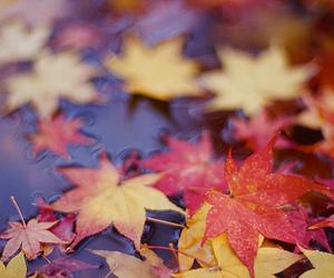 autumn, orange, and red image