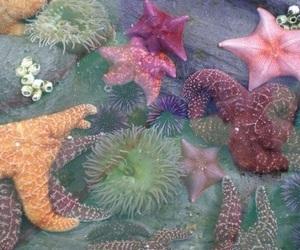 starfish, sea, and ocean image
